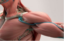 Selecting exercises for rotator cuff-related shoulder pain